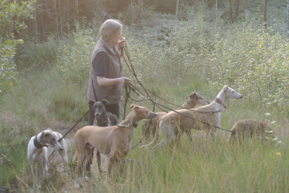 Spaziergang mit den Hunden